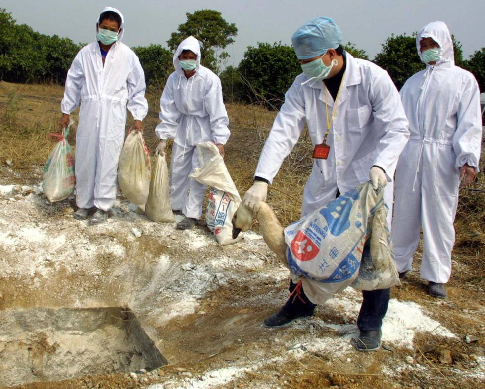 Trabajadores entierran a aves con gripe aviar en 2004, en Guandong, al sur de China.