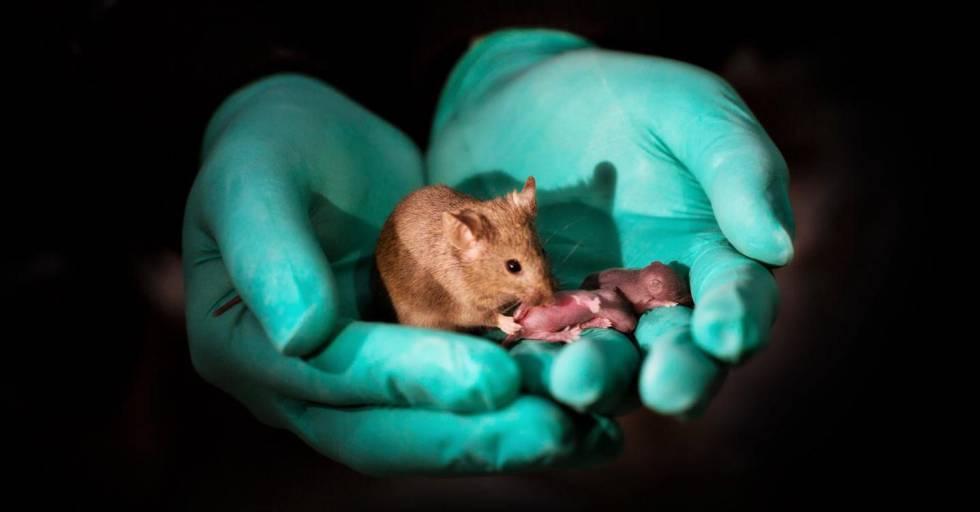 Resultado de imagen para cientificos ratones mismo sexo