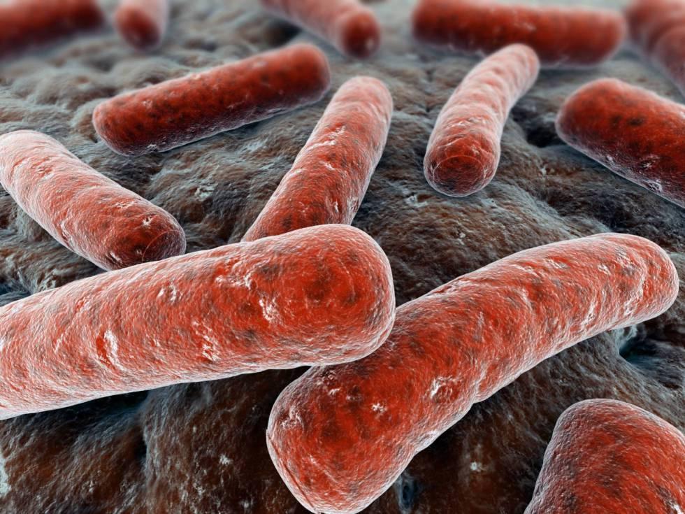 Un grupo de bacterias.