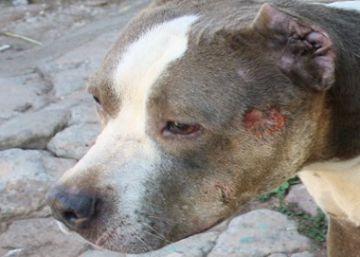 Noticias Sobre Animales Peligrosos El País
