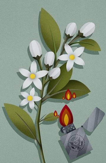 Palestina, nostalgia de la flor de azahar