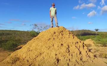 Cupins construíram a maior estrutura do planeta no Nordeste brasileiro