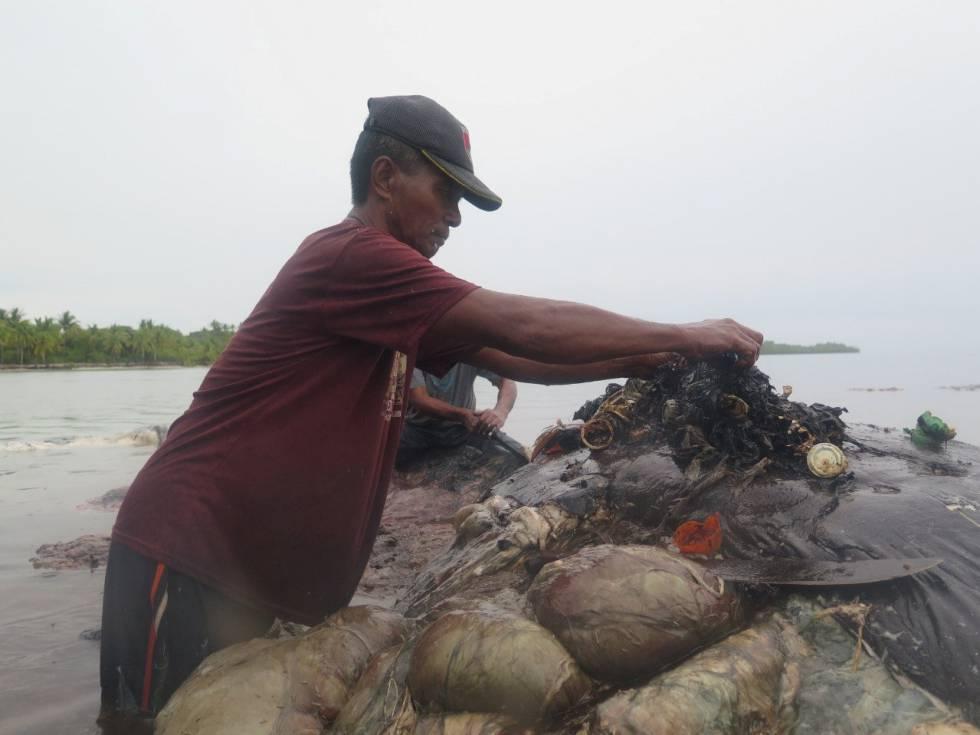 Un hombre retira este lunes trozos de plástico del cadáver de una ballena en el Parque Nacional Marino de Wakatobi (Indonesia).