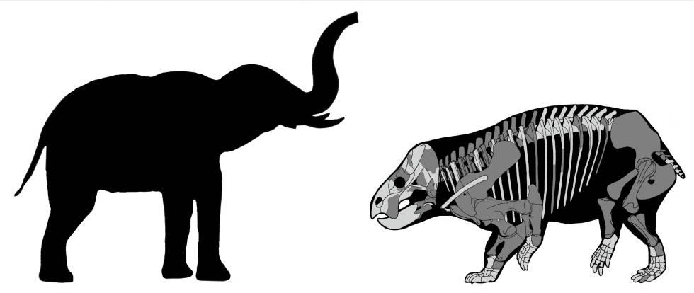 Descubierto un antepasado gigante de los mamíferos que rivalizó con los dinosaurios 1542905117_243498_1542905852_sumario_normal