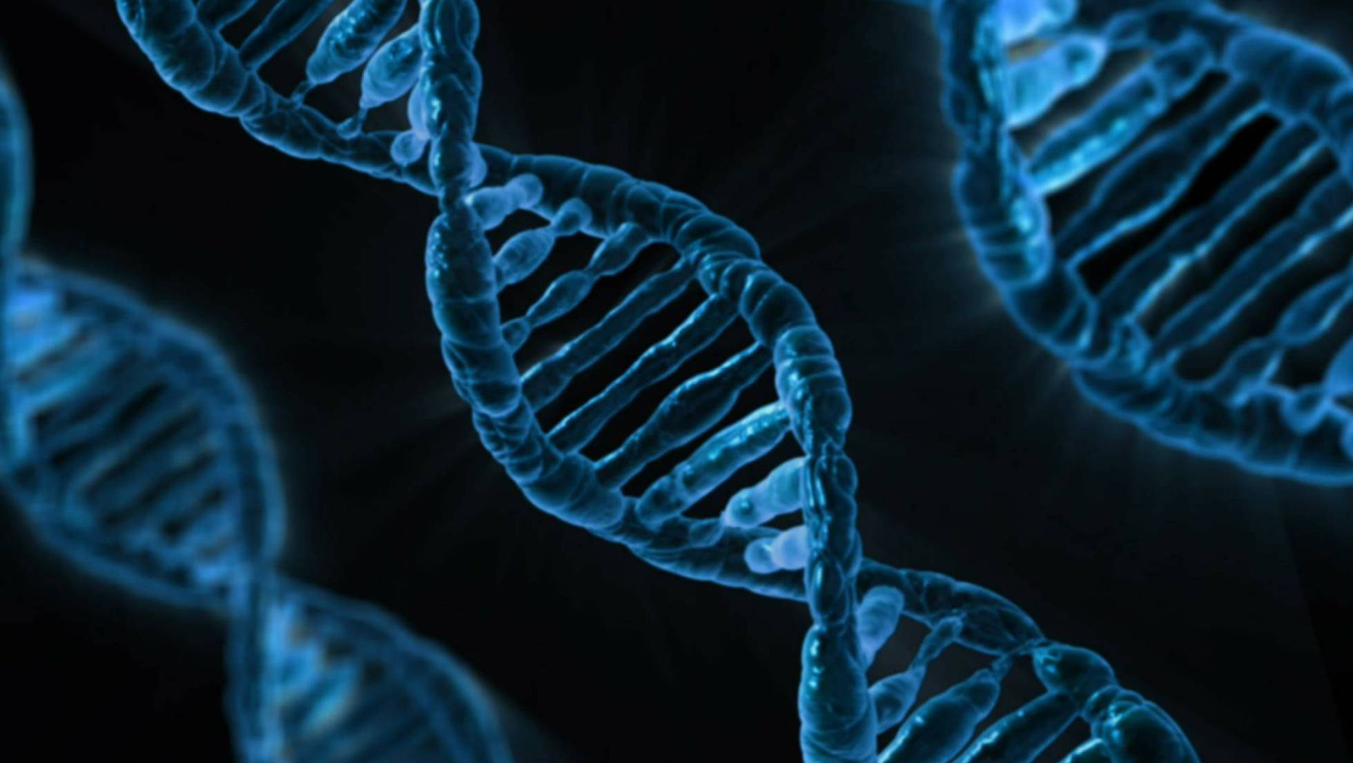¿Qué son los algoritmos genéticos?