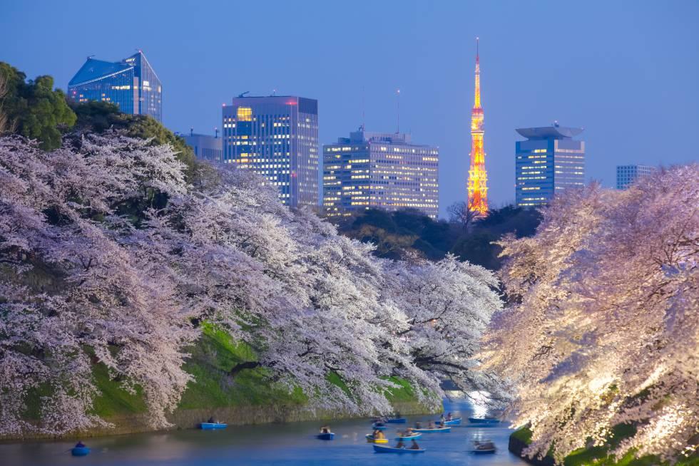 Floración de los cerezos en Tokio.