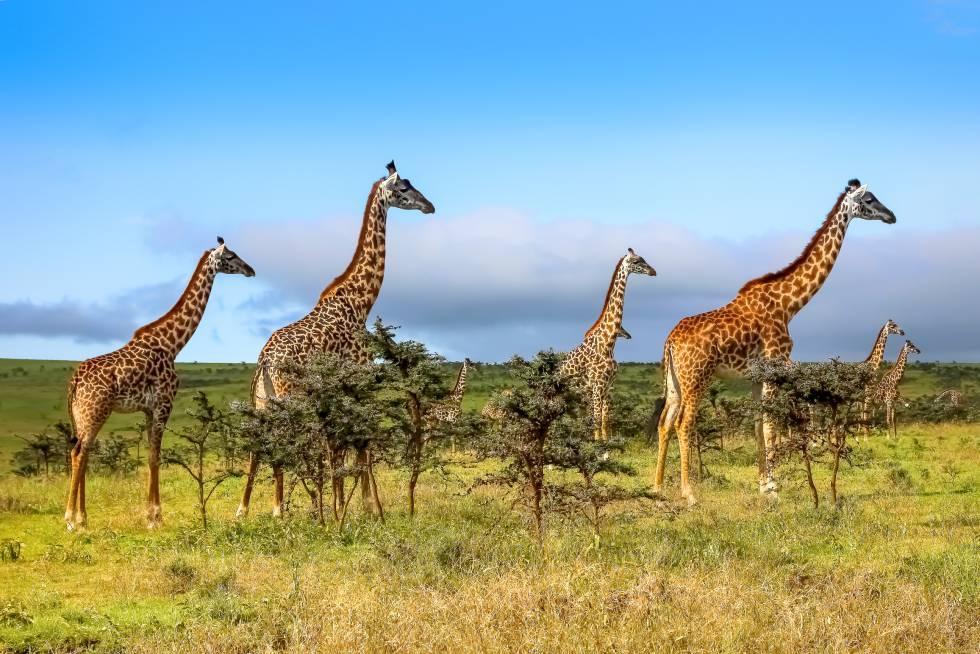 La mejor época para visitar Masai Mara (Kenia) es en octubre, tras las lluvias.