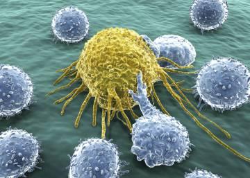 Una enigmática fusión entre células potencia la metástasis