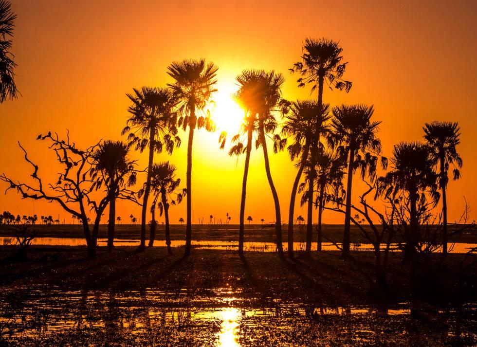 Paisaje de los Esteros, las zonas pantanosas de la provincia de Corrientes, al noroeste de Argentina.