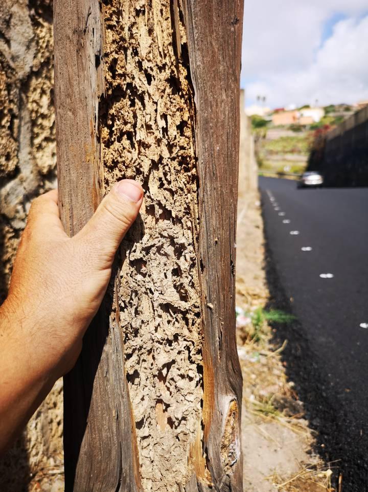 Un vecino muestra los efectos de las termitas.