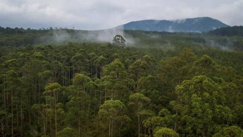 Vista aérea de Cikole, un bosque protegido cerca de Bandung, Indonesia, el 6 de noviembre de 2018.