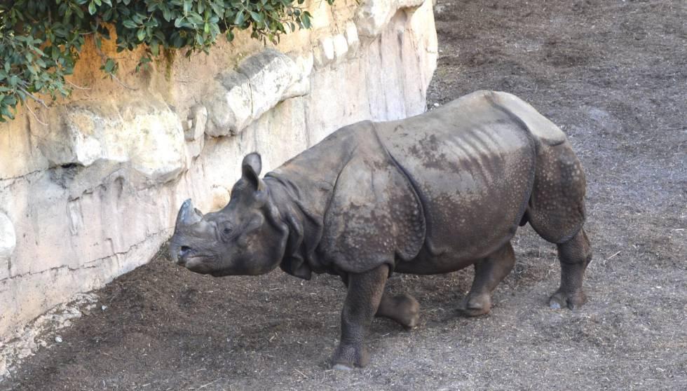 dificultad para orinar video del zoológico