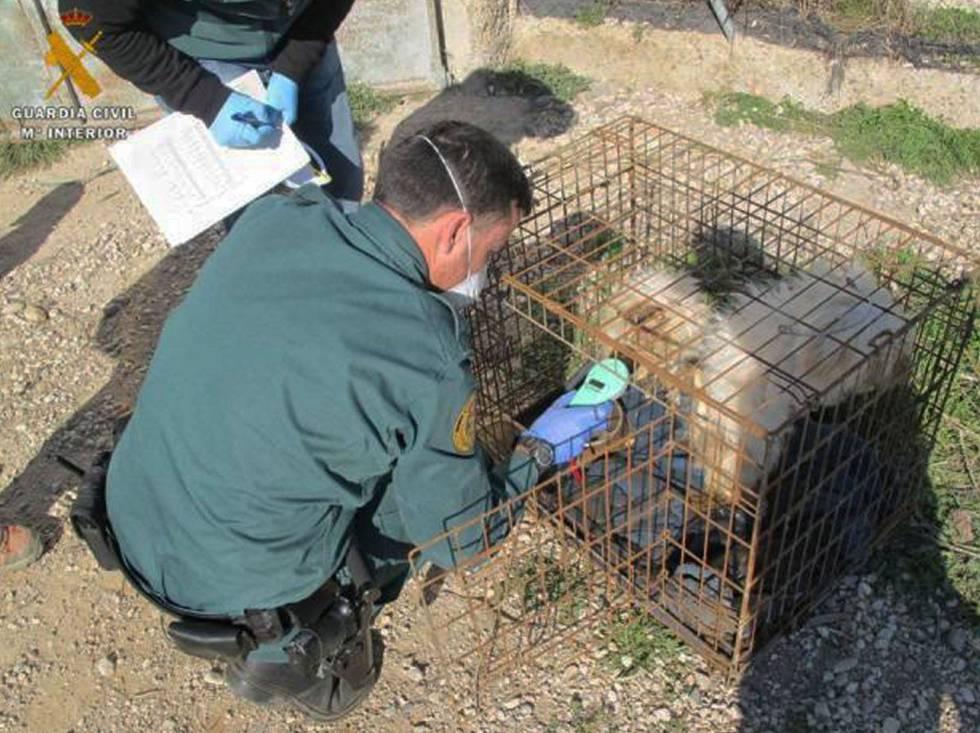 Un agente de la Guardia Civil, con uno de los perros rescatados en un criadero ilegal de El Burgo de Ebro.