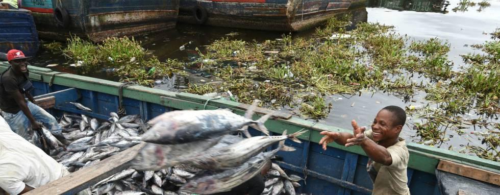 Descarga de atunes en el puerto industrial de Abidjan, en Costa de Marfil. Los países subtropicales serán los que más pesca pierdan si no se invierte el calentamiento global.