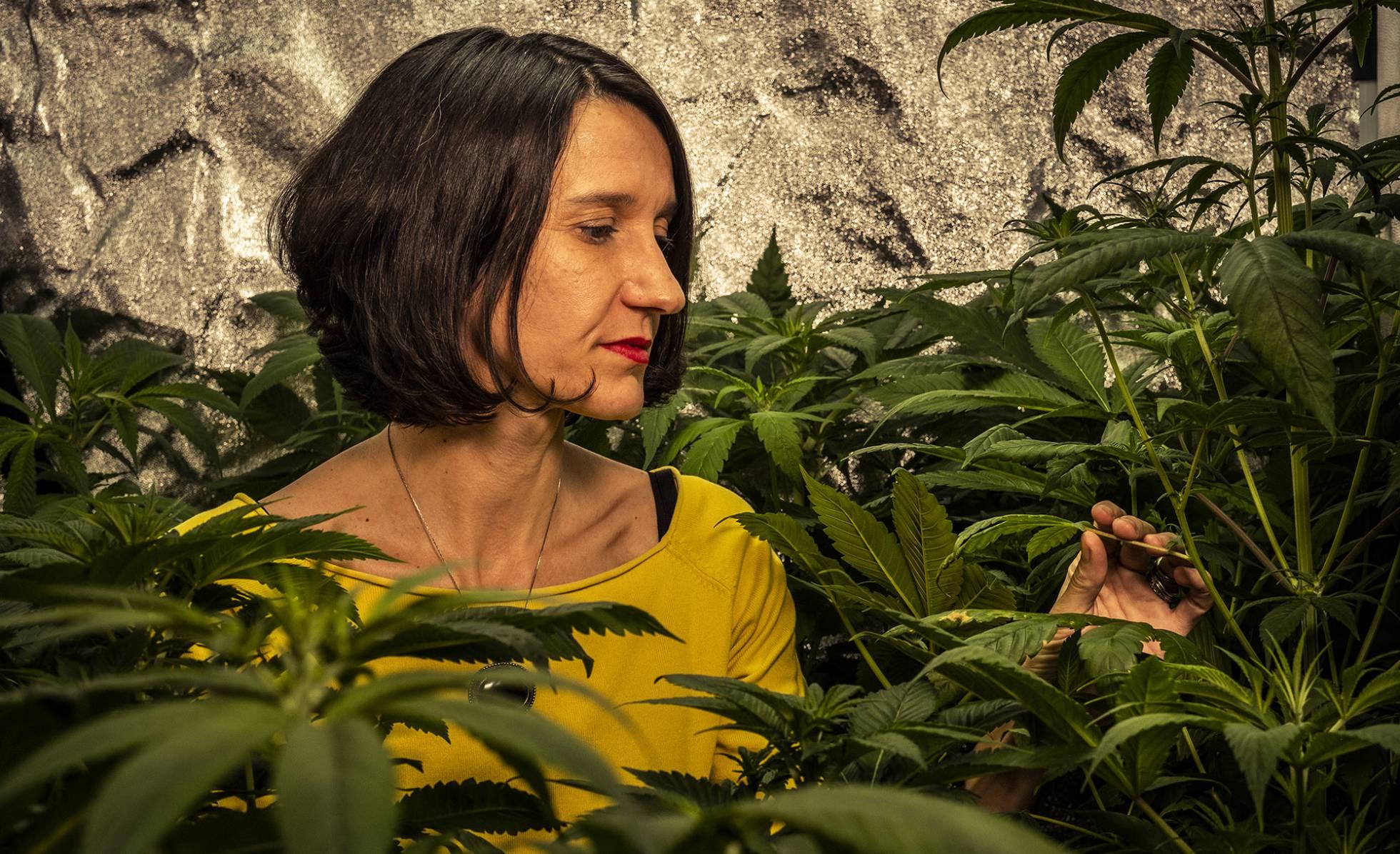 cannabis-el-negocio-millonario-que-apunta-a-convertirse-en-el-pelotazo-del-siglo
