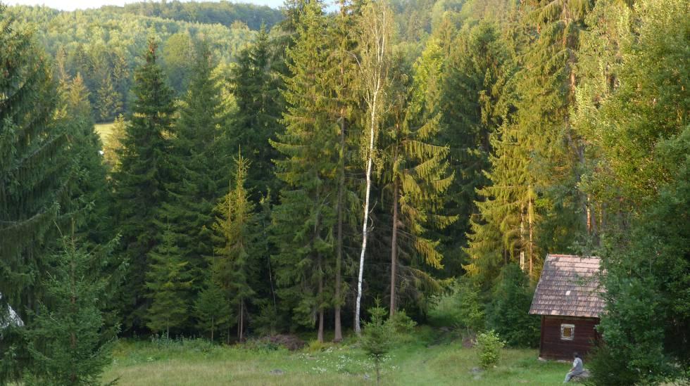 Un hombre observa el bosque de Transilvania, en Rumanía.