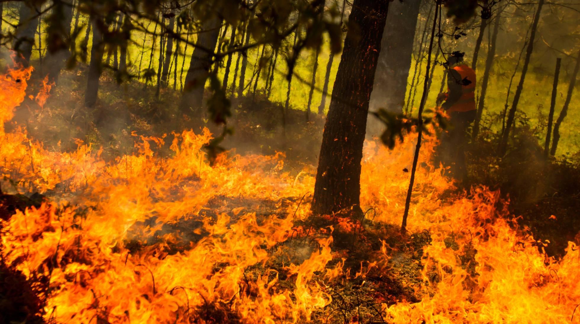 Incendio forestal en Rianxo, A Coruña.