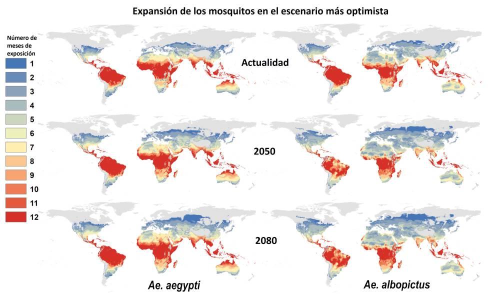 Esta es la proyección que hace el estudio para la expansión de las dos especies del mosquito Aedes en el escenario más optimista, si las temperaturas solamente subieran un grado centígrado de aquí a 2080. Los colores representan durante cuántos meses las temperaturas serían propicias para estos insectos. Pinchar en la imagen para aumentar.