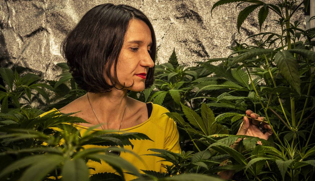 newest 0f99f ec65c The battle to legalize cannabis in Spain