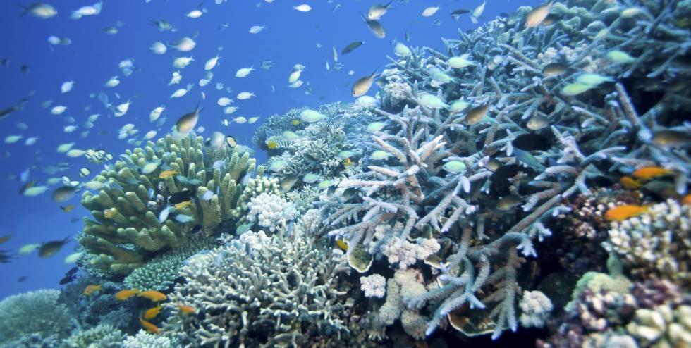 Vista de un arrecife con peces y corales en Townsville, (Queensland, Australia).