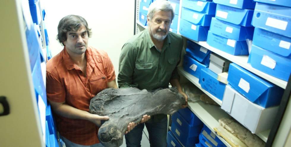 Messineo y Politis sostienen con esfuerzo el fémur del megaterio hallado en un campo de la región pampeana argentina.