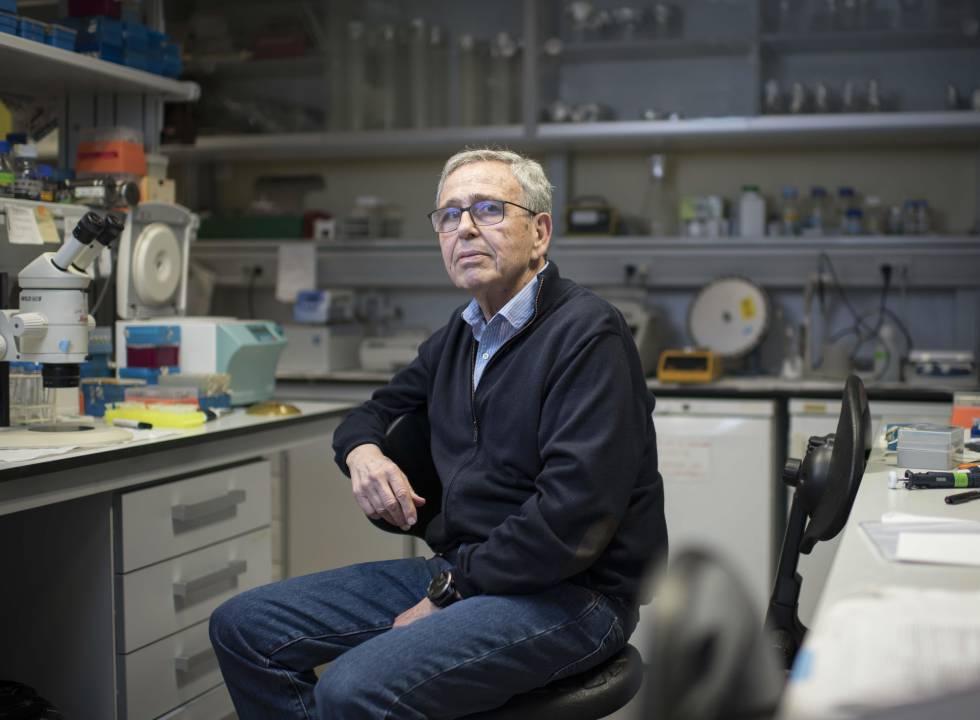 El genetista Ginés Morata, en su laboratorio, en Madrid.