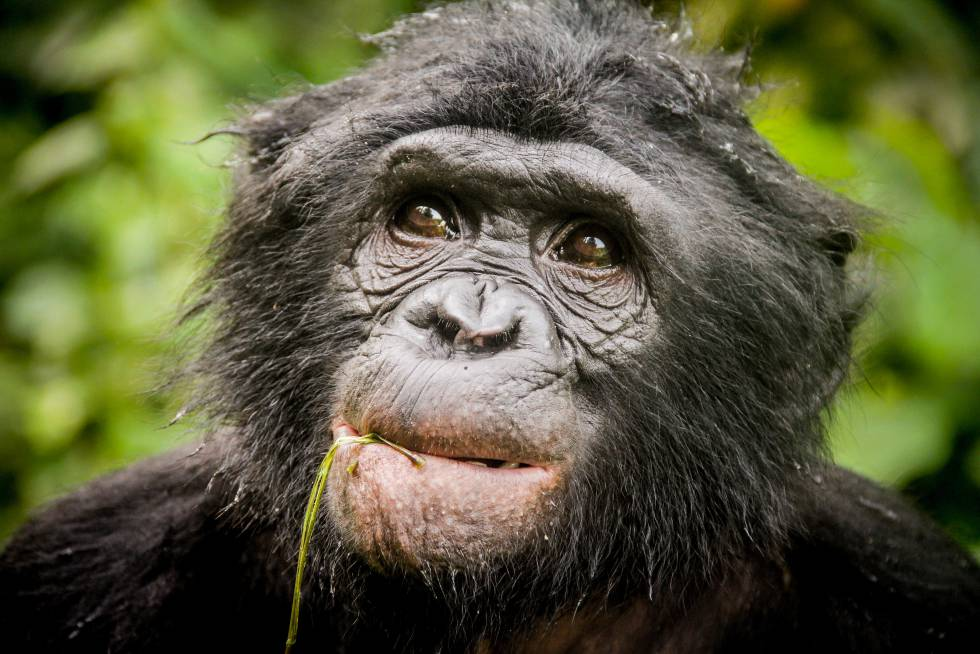 Encuentro bonobo hombre [PUNIQRANDLINE-(au-dating-names.txt) 47