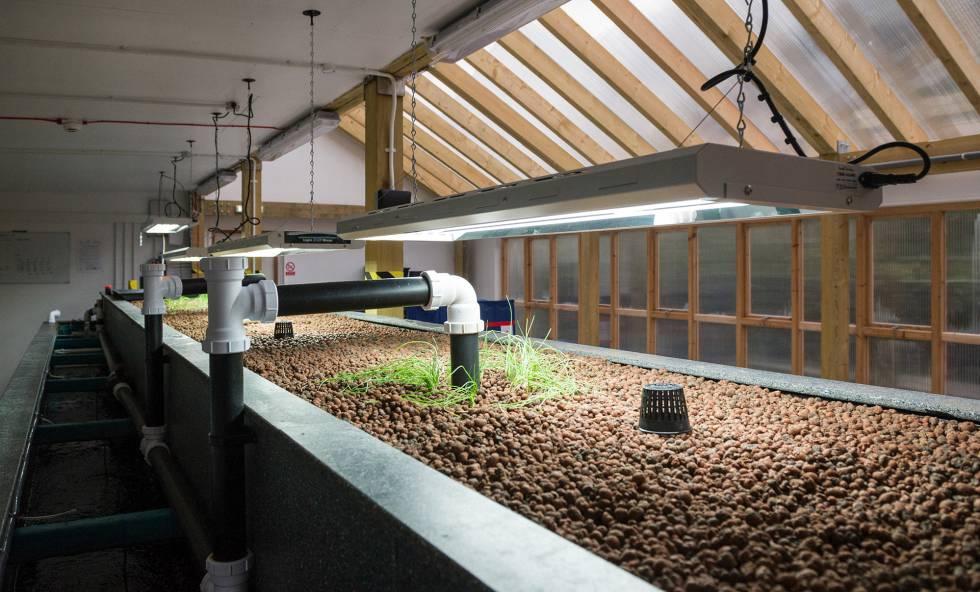 Tanque de aquaponics, sistema que combina la cría de peces con el cultivo mediante hidrocultura en Todmorden (Inglaterra).