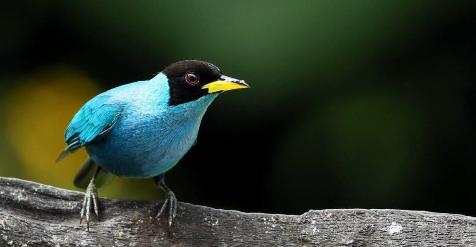 En Colombia existen más de 1.920 especies de aves.