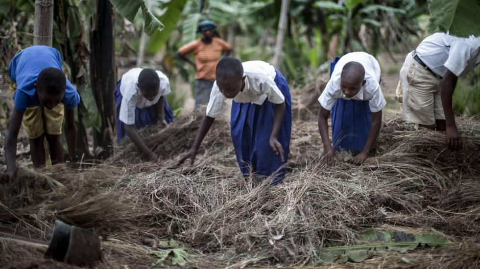 Alumnos de una escuela de Rumuso, en Tanzania, utilizan hojas secas para cubrir el suelo y evitar la erosión del terreno.