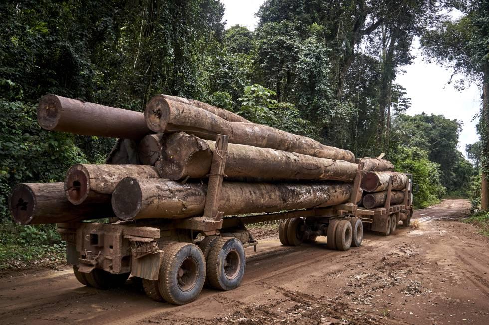 Um caminhão de grande tonelagem transporta madeira por uma trilha na fronteira com a Terra Indígena Maró.