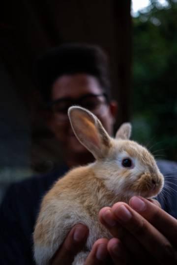 Efren está sosteniendo un conejo.