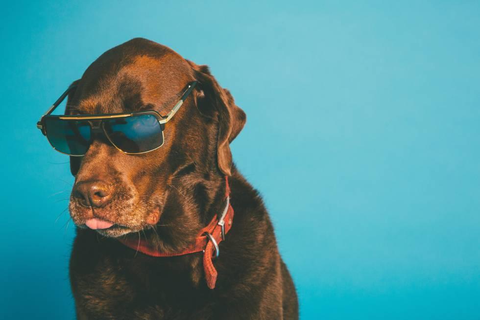 Dudas Cuándo Otras Y Sol Que Gafas Diez Perro Al Poner Hay De pVMUSz