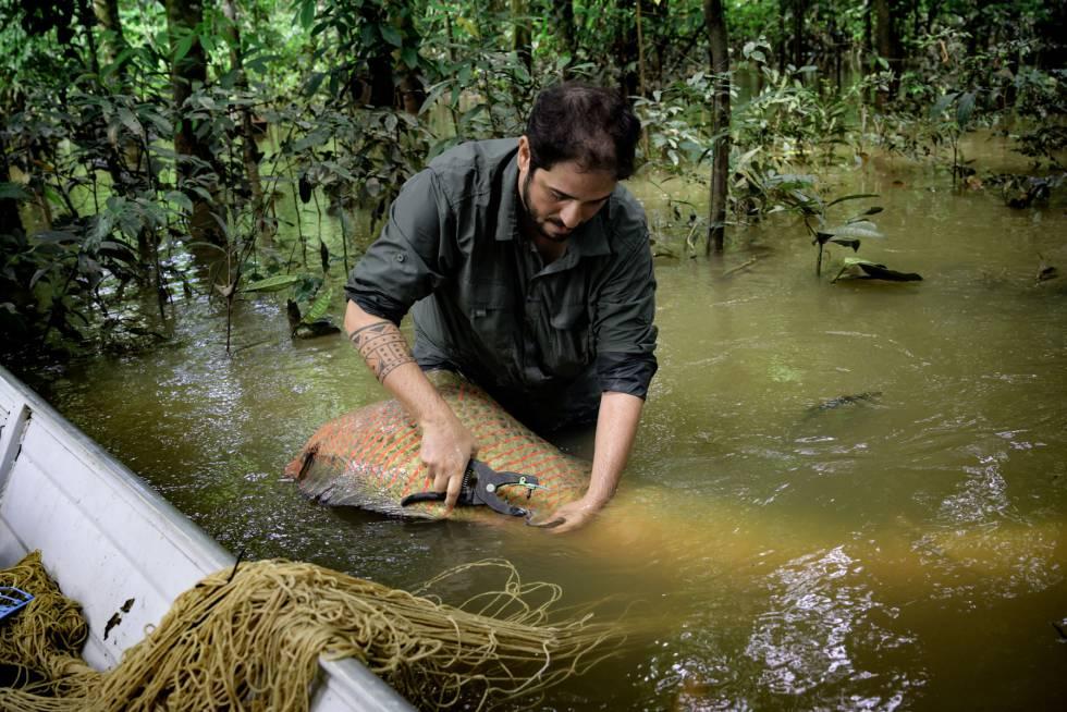 João Campos-Silva, ecologista brasileño que ha desarrollado un plan para salvar a una especie en peligro de extinción del Amazonas. (© Rolex  Marc Latzel).