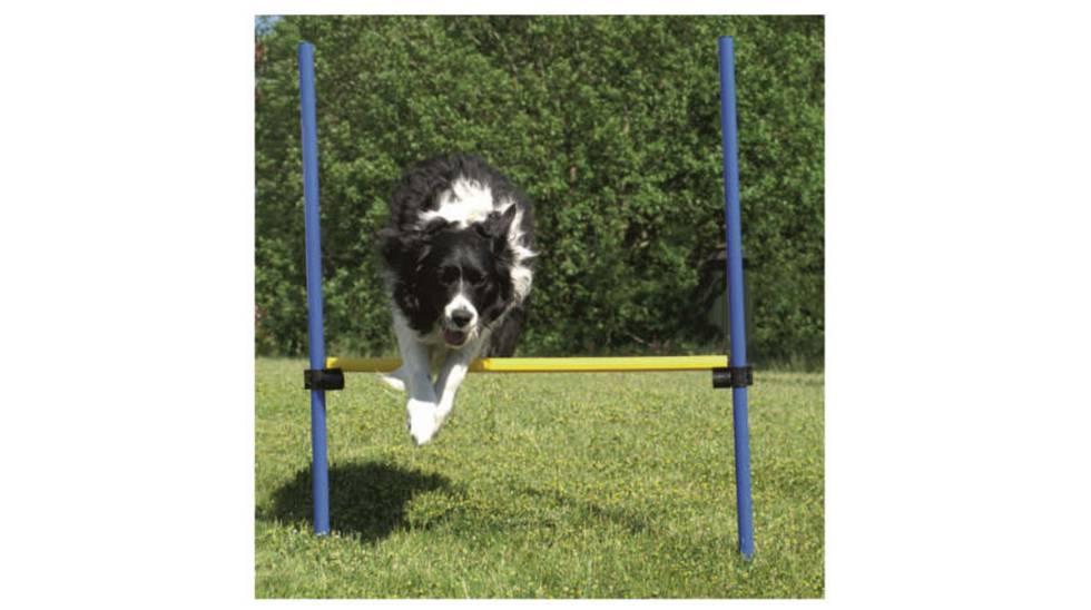 15 'gadgets' para entretener a tu perro al aire libre