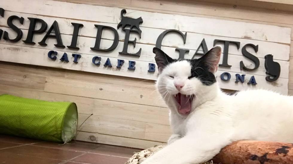 Bébete un café y llévate el gato