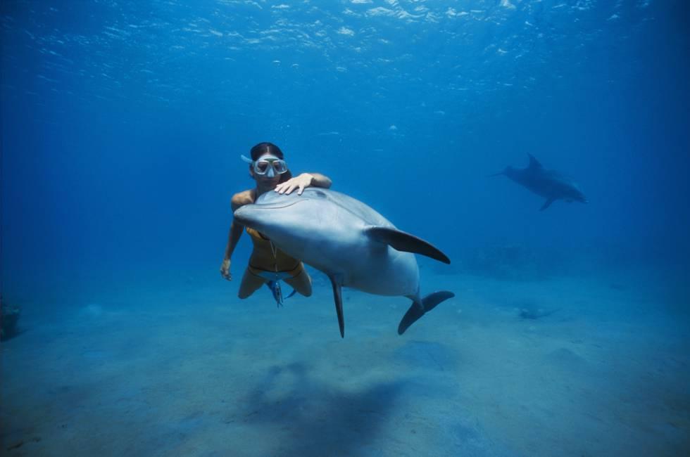 vida de un delfin