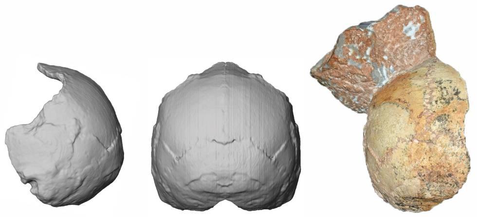 El cráneo 1 de Apidima con parte de sedimento adherido, supuestamente de un 'Homo sapiens' que vivió hace 210.000 años, el más antiguo de Europa.
