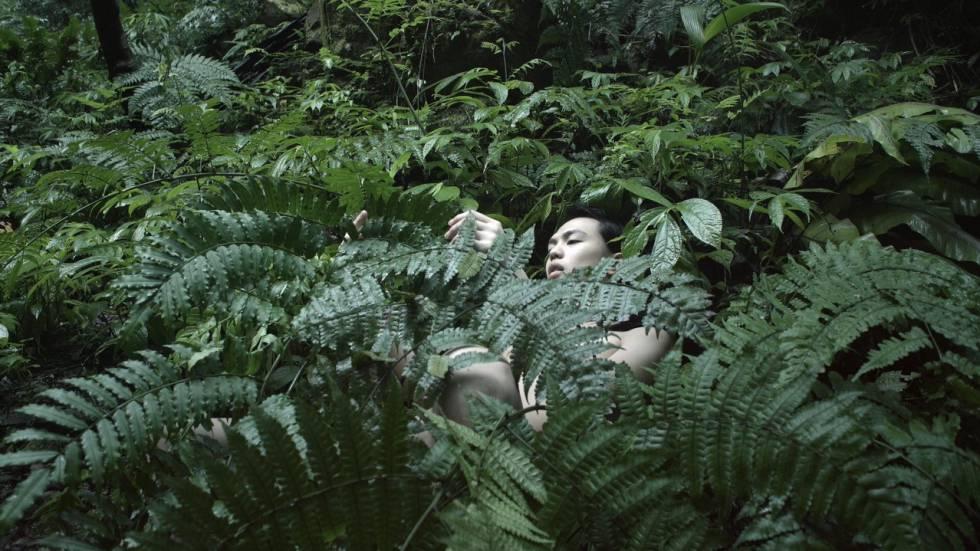 Fotograma de la obra 'Pteridophilia', de Zheng Bo.