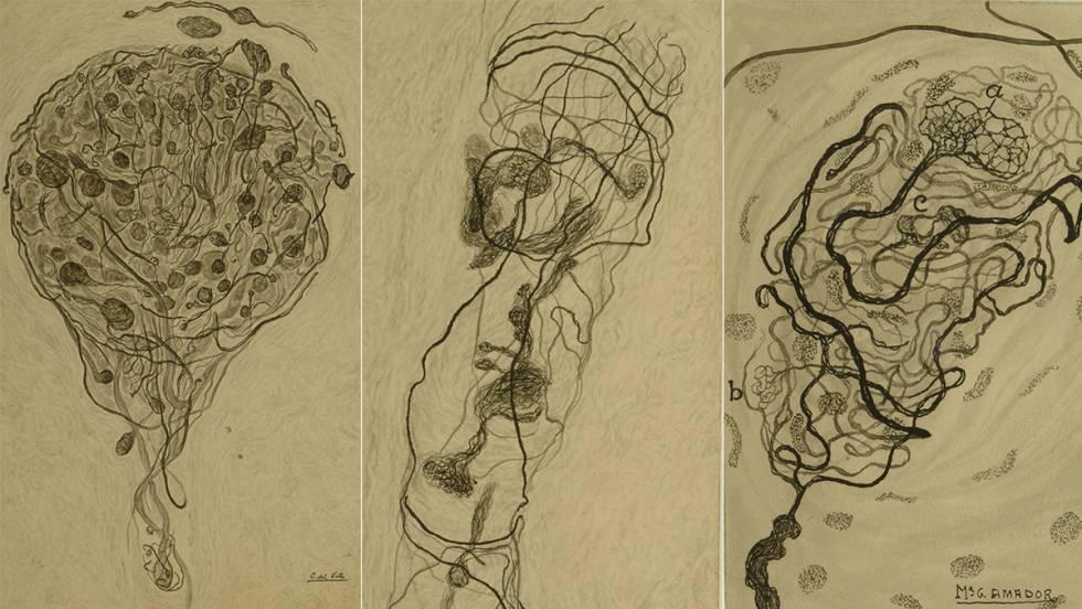 Dibujos de la inervación del clítoris elaborados por Conchita del Valle y María García Amador.