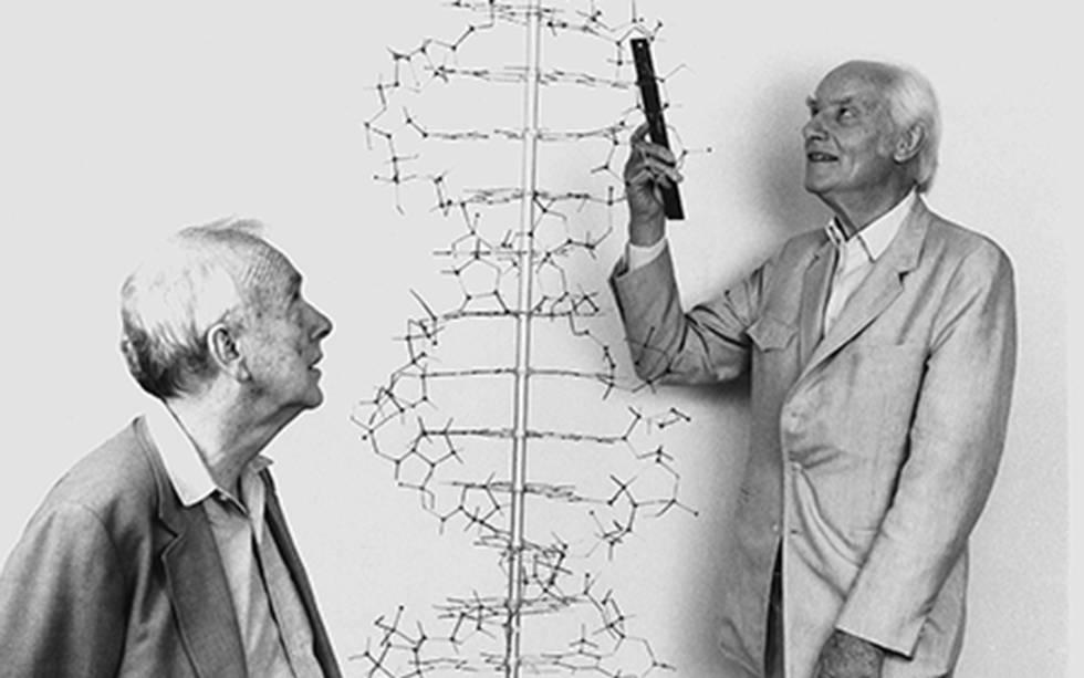 James Watson (izquierda) y Francis Crick, con un modelo de la estructura del ADN.