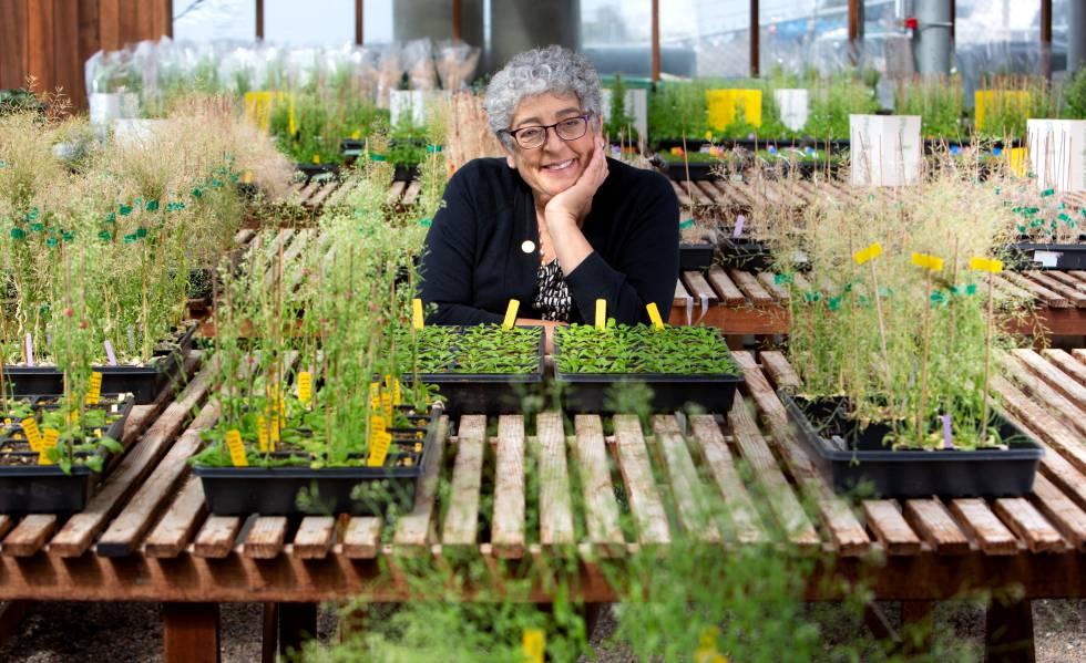 cambio climatico plantas