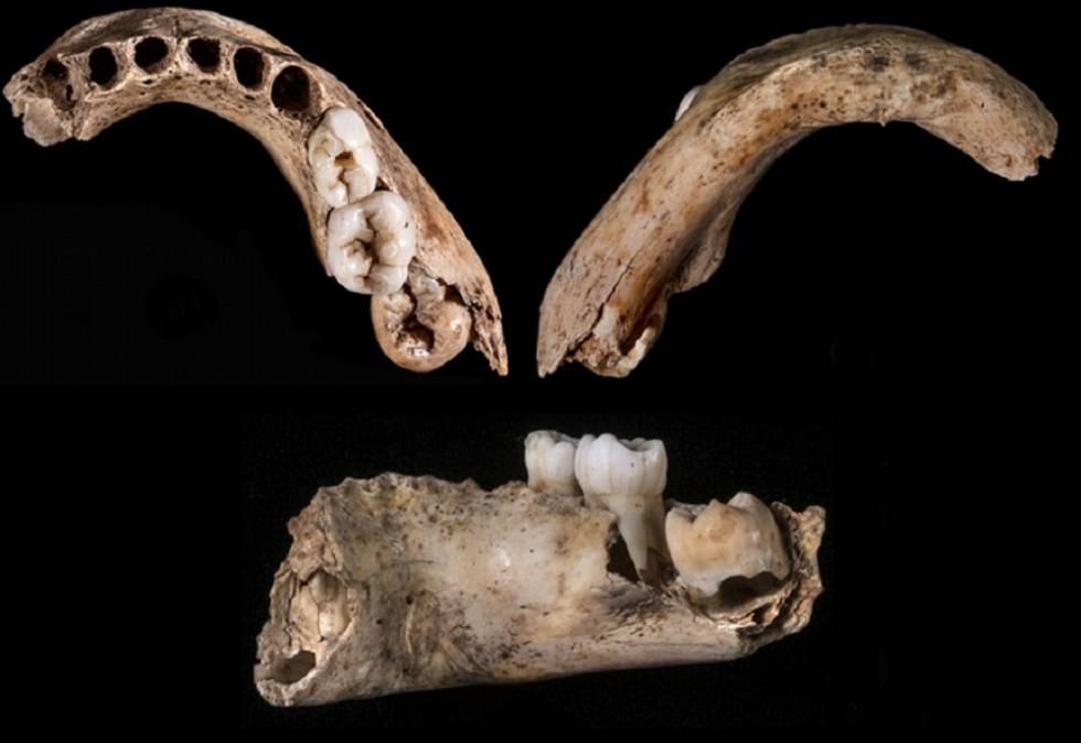 Tres vistas de la mandíbula humana de la cueva de El Castillo, en Cantabria.