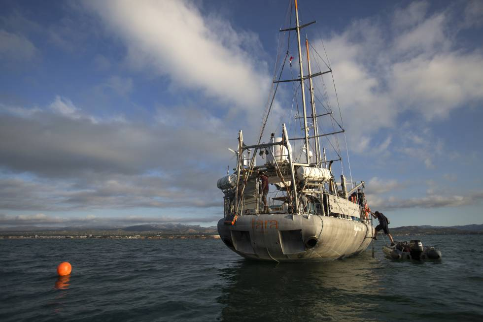 El velero 'Tara', donde se realiza la investigación, fondeado en frente el puerto de la Amposta, cerca a la desembocadura del río Ebro.rn rn