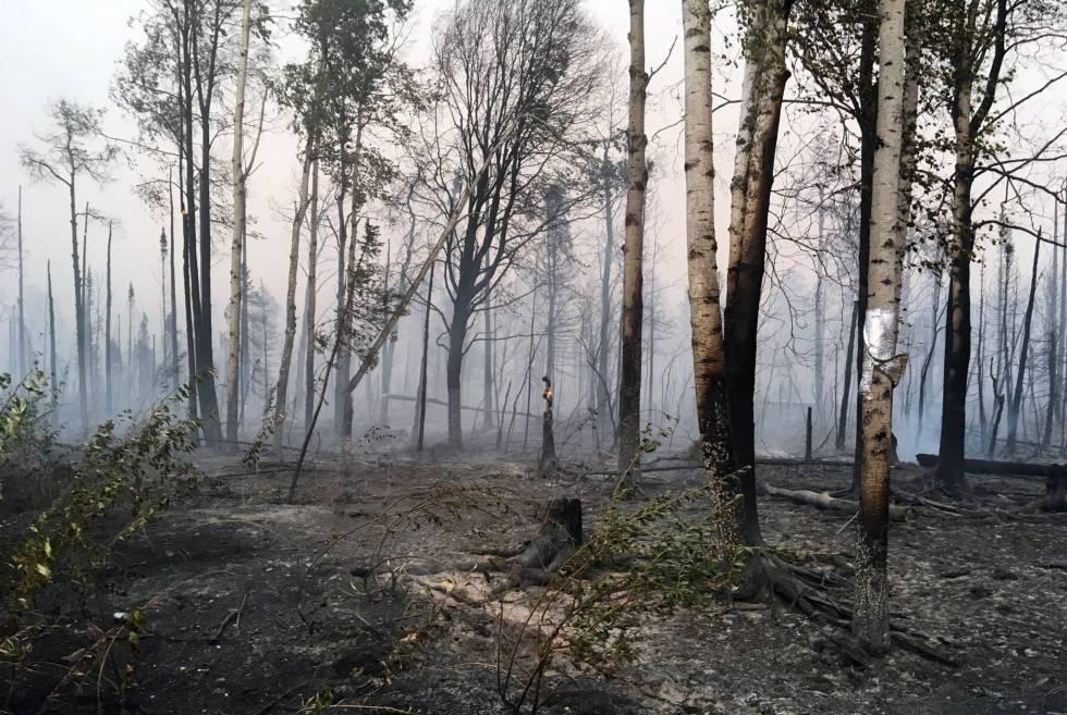 Un bosque de Alaska totalmente calcinado por el fuego, el pasado 18 de agosto.