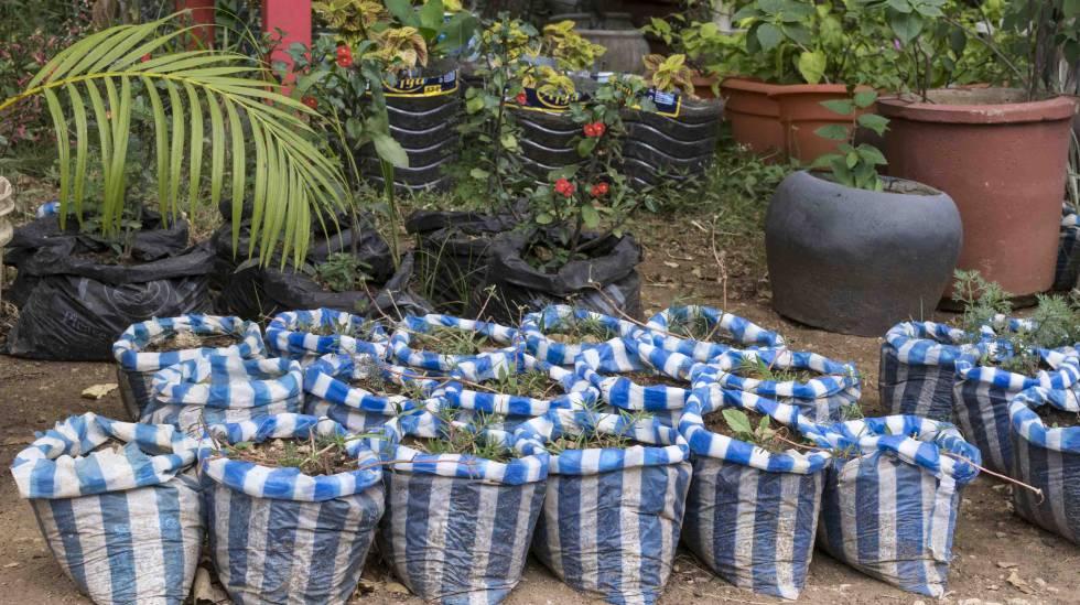 Plantas a la venta en uno de los muchos viveros situados a los márgenes de las carreteras en Tanzania.
