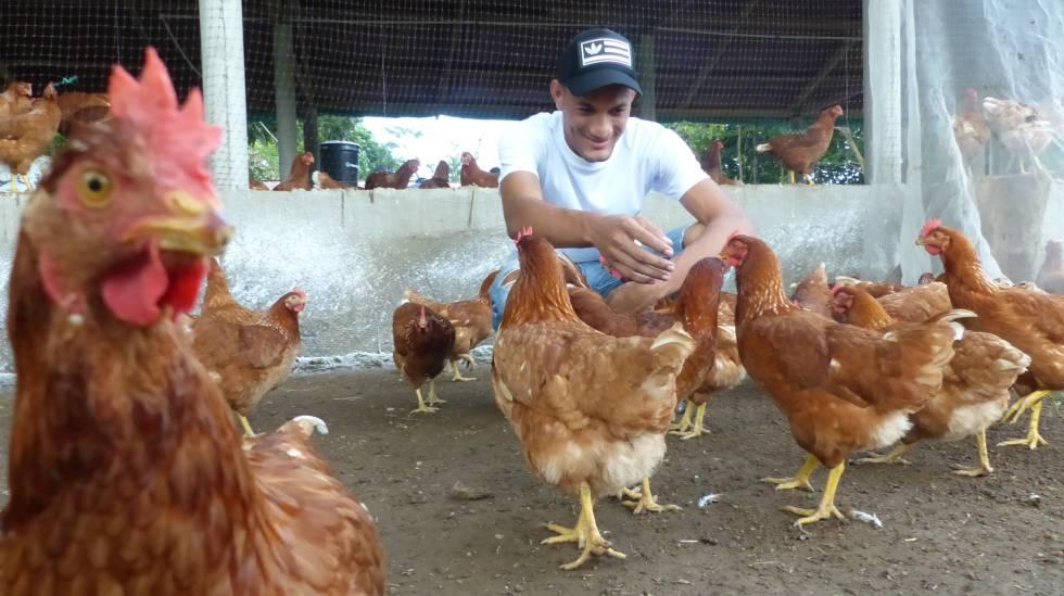 El ingeniero mecánico Riky Villar, en la granja de gallinas, en Dibulla.