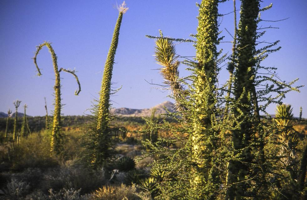 Los 12 desiertos más bellos (o casi) del mundo