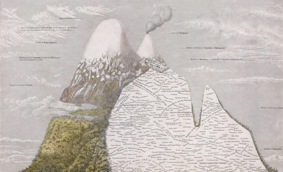 'Naturgemälde', un mapa del ecosistema de Los Andes dibujado por Humboldt.