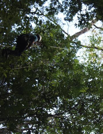 En lo alto de un gigante de la Amazonia.